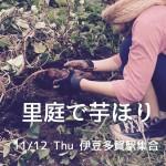 11/12 里庭で芋掘り!