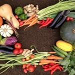 11/21 【種を植えて、美味しく食べよう】なごみ農園の野菜の種のワークショップ